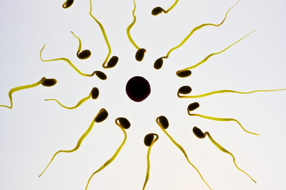 image of sperm cells approaching egg